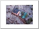 Esondazione fiume Ticino anno 1994 città di Pavia-7